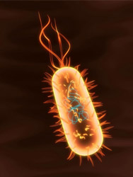 rendition of a bacteria